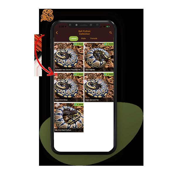 sale sticker on reptile listing