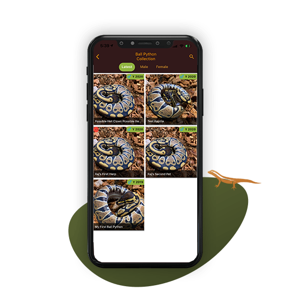 reptile category listing reptile list
